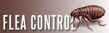 Flea & Termite Control Temecula