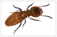 Termite Pest Control Temecula