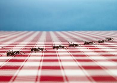 Ant Control Service Temecula California