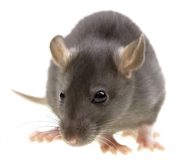 rat-control-1024x8971.jpg