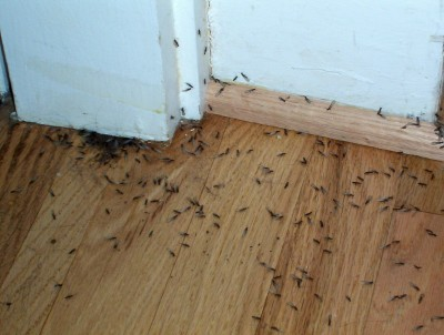 Termite infestation is a serious problem for your home.