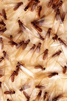 Termite Control Murrieta