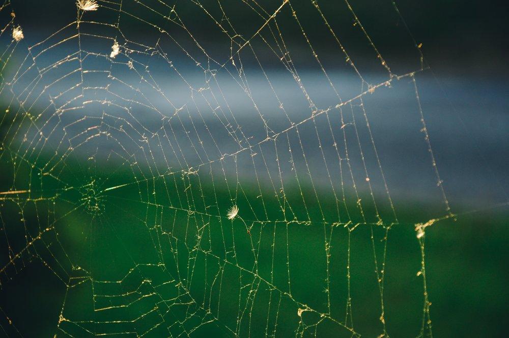 cobweb-spider-s-web-spiderweb-8459.jpg