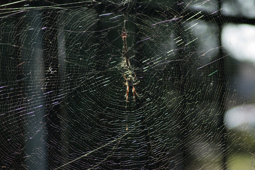 The Spider's Web 3