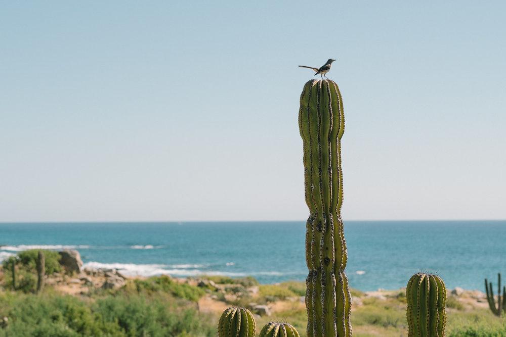 nat-locky-cabo-san-lucas-mexican-destination-wedding-3.jpg