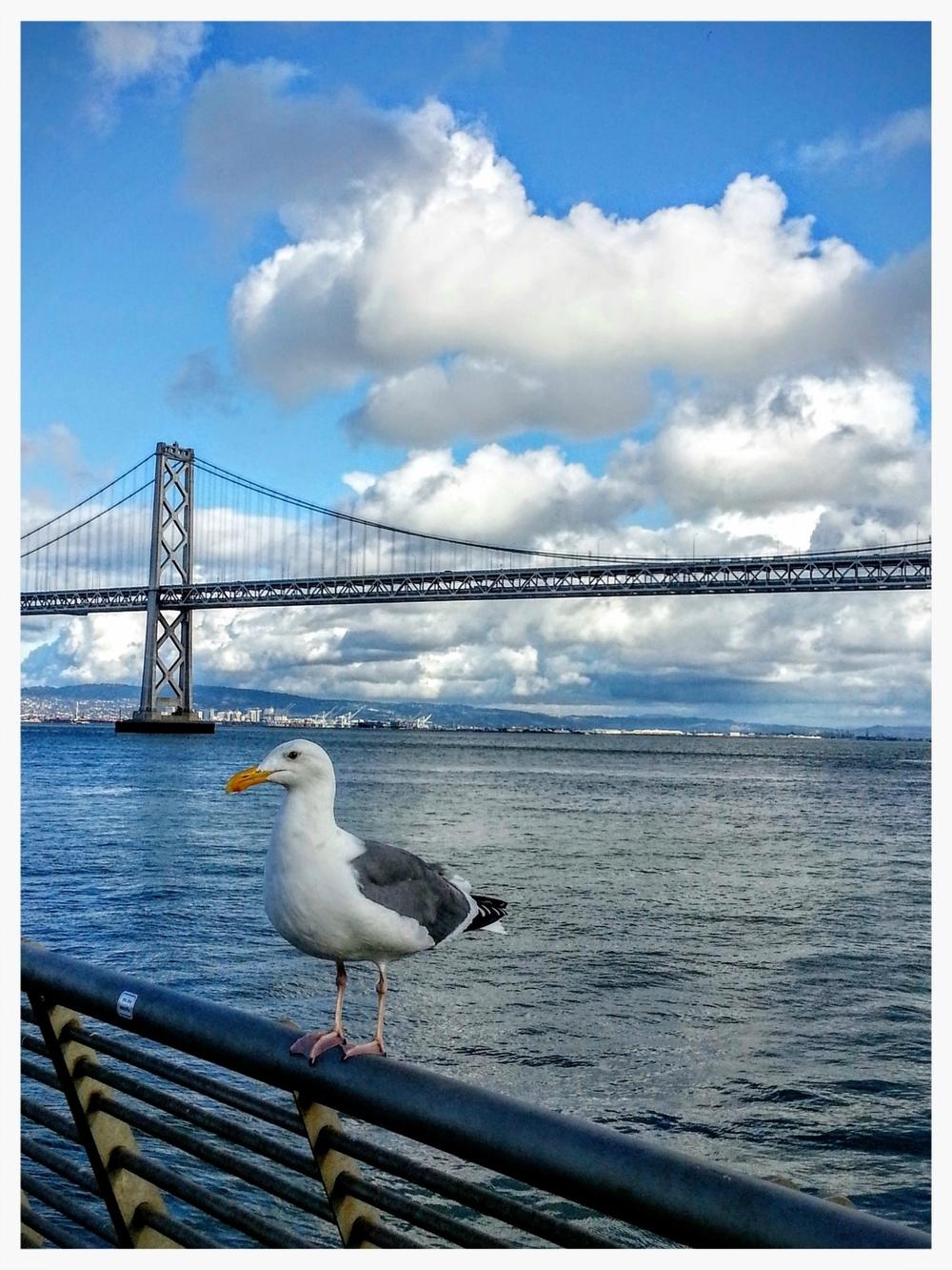 SF-pier-gull.jpg
