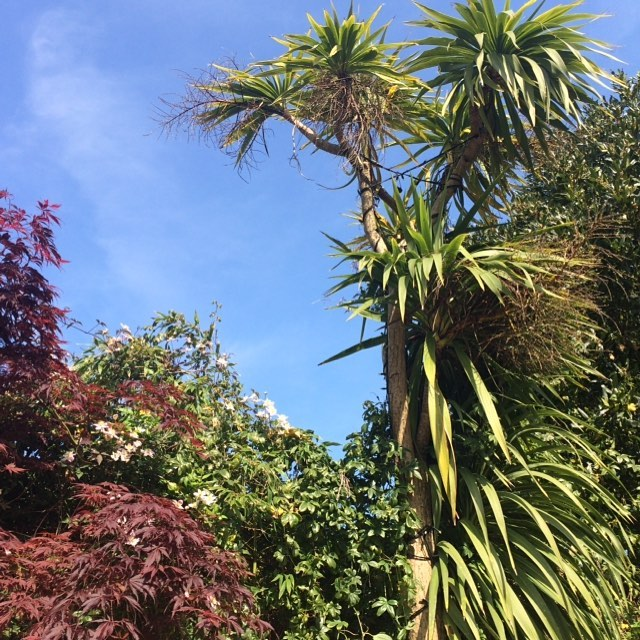 Day 7: An outdoorsy photo - my view from the backyard, with actual real sun! ☀️(a rarity in the fair British Isles) #view #lookup #writewemay #writersofinstagram #sunshine #summer #happy #palms #authorchallenge #may
