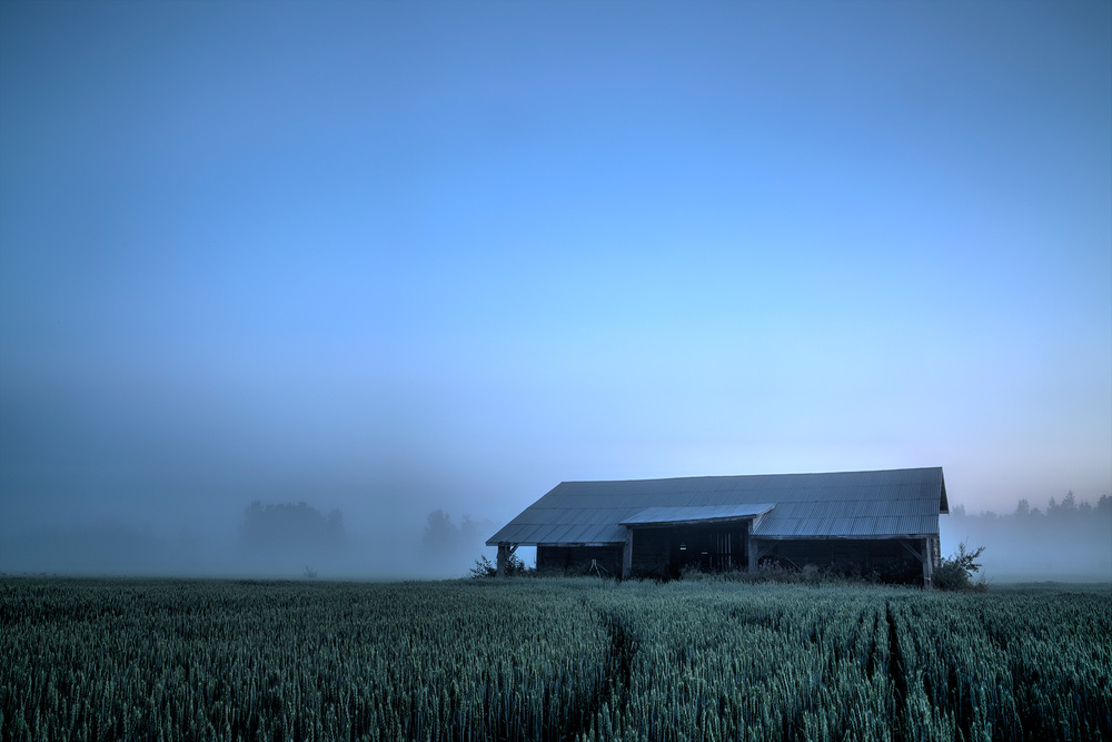 Foggy Countryside