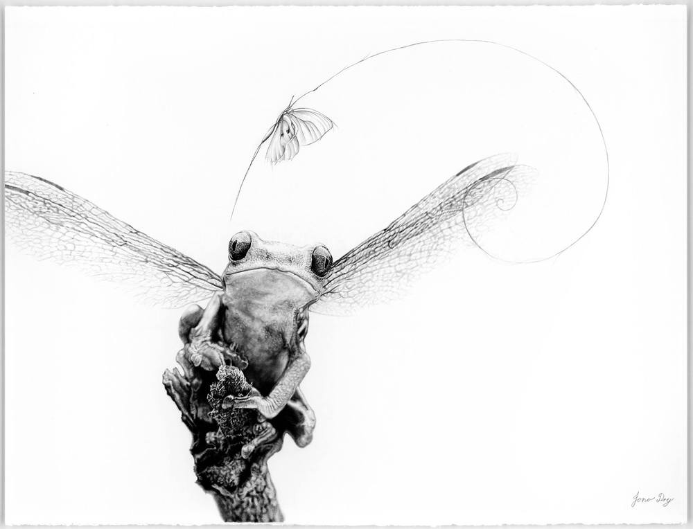 Jono dry art pencil drawing morph jpg