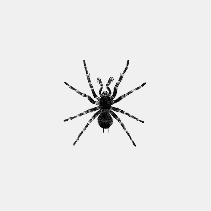 Tarantula_Fer_alcazar.jpg