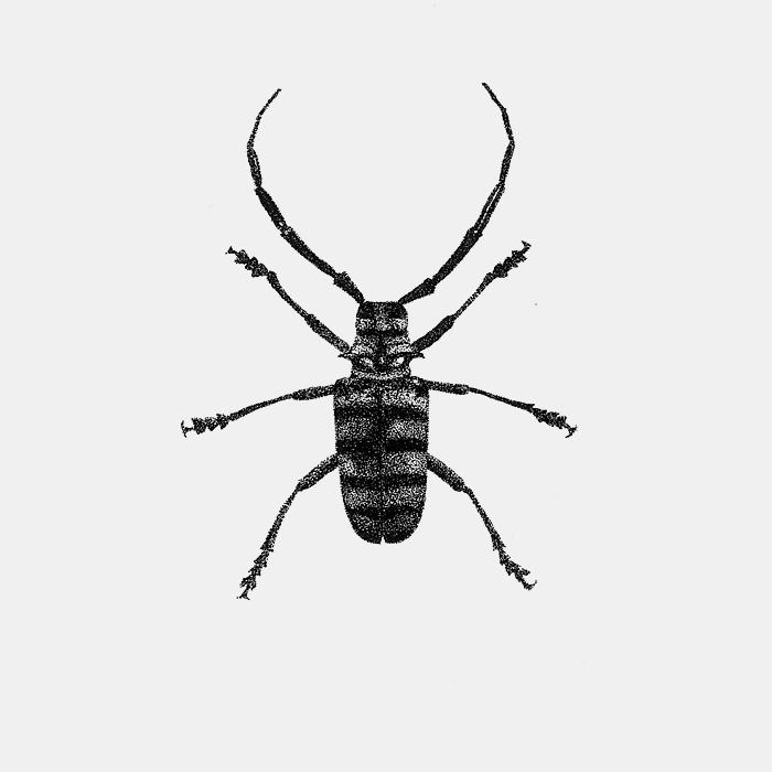 Cerambucidae.jpg