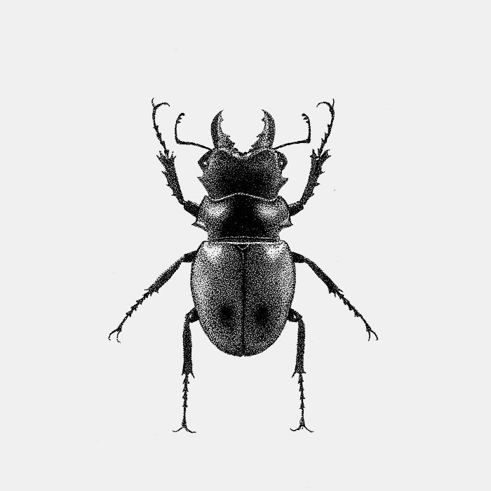 LucanusCervusLucanidae_FerAlcazar.jpg
