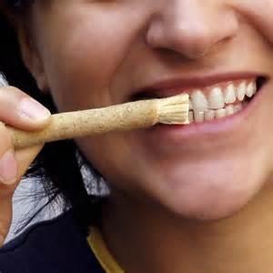 一支树枝牙刷的寿命大约是一周至两周。