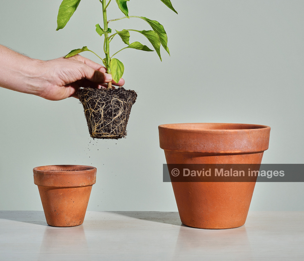 http://www.gettyimages.com/detail/photo/row-of-pot-plants-forming-a-graph-high-res-stock-photography/101952929