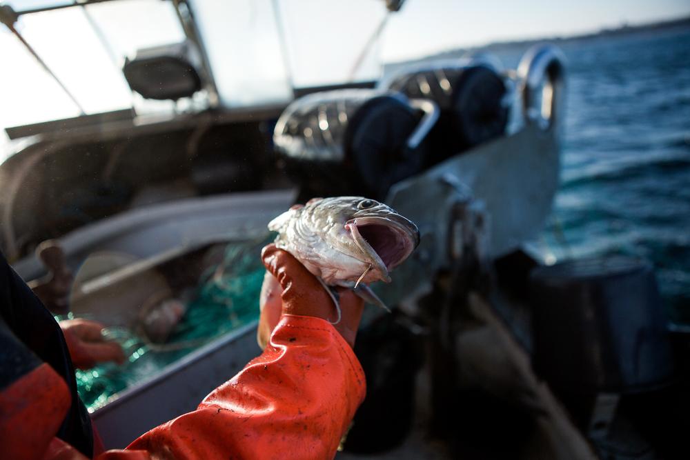 AlbertoGrasso-fisherman-9.jpg