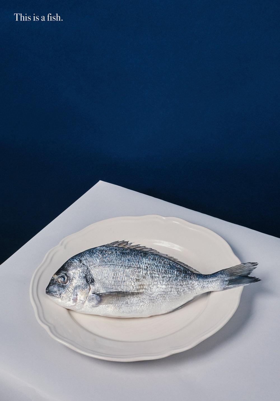 01_01_proverb_fish_fish.jpg
