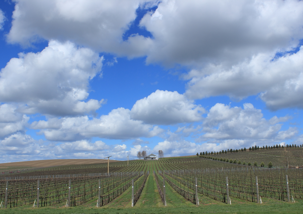 Walla Walla Vintners, Washington