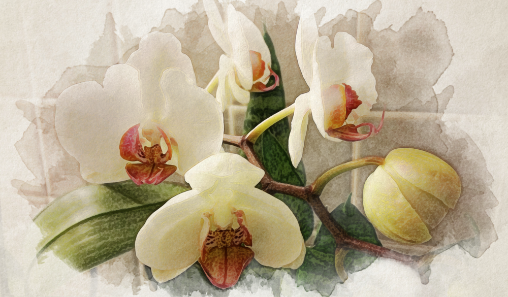 white_orchids.png