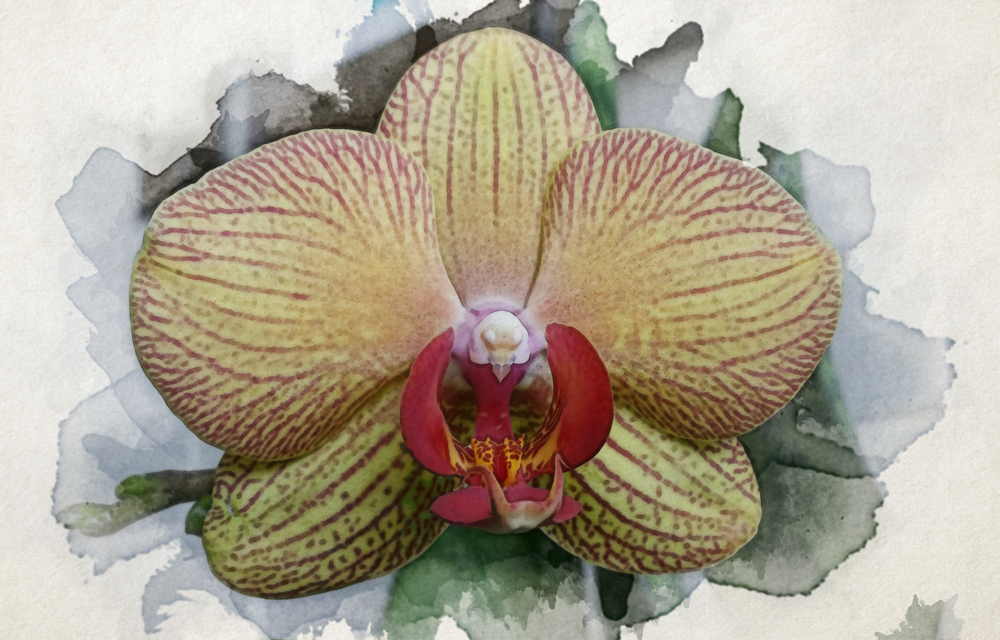 orchid_face.png