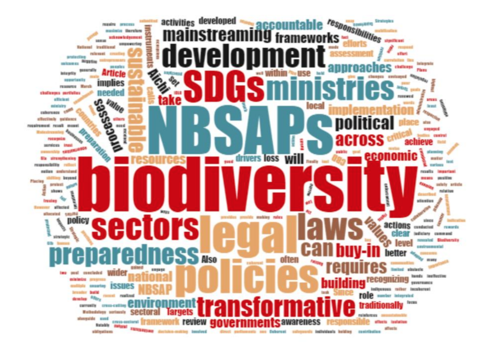 Report: Review of Post-2010 National Biodiversity Strategies and Action Plan