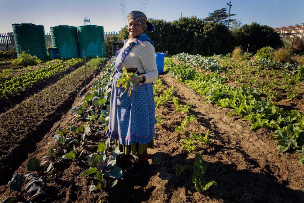 Sustainable Development and Economic Opportunity - Promoting fair and sustainable development outcomes
