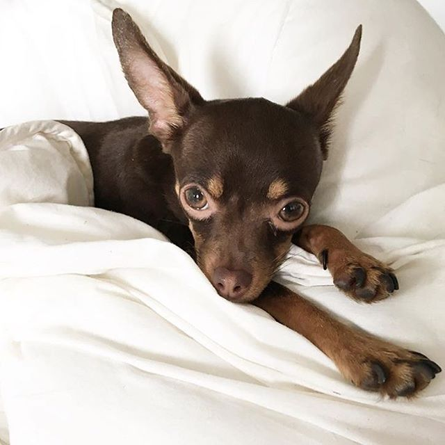 Good morning from Ulyana and I #doglover #dogsofinstagram #puppylove