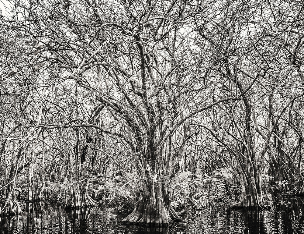 EVERGLADES APPLE TREES.jpg