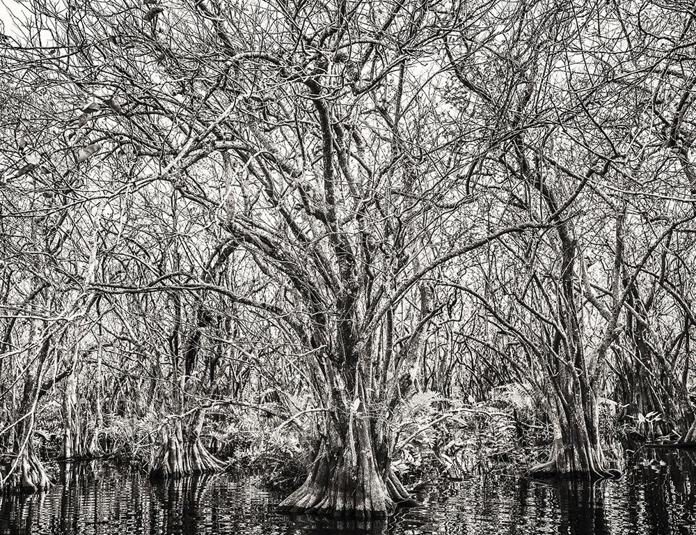 EVERGLADES APPLE TREES.jpg