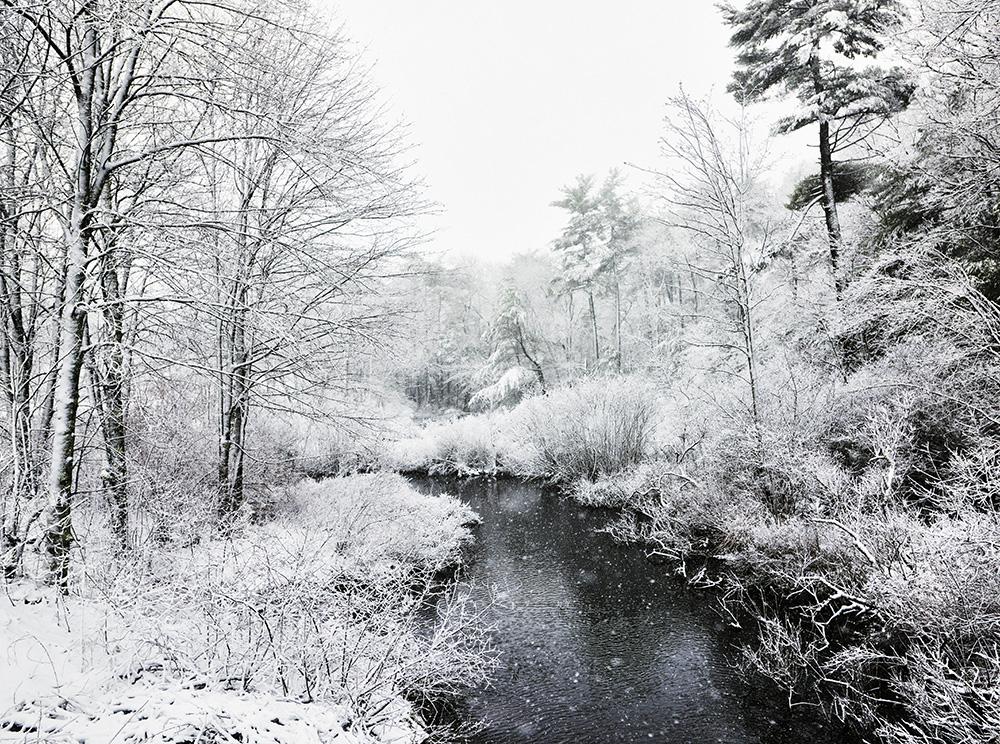 SPRING SNOW SHOWER.jpg