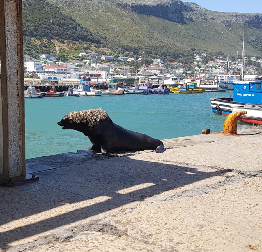 My favourite Cape Fur Seal