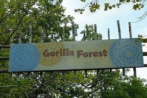 Louisville Zoo Gorilla Forest