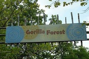 Louisville Zoo Gorilla Forest