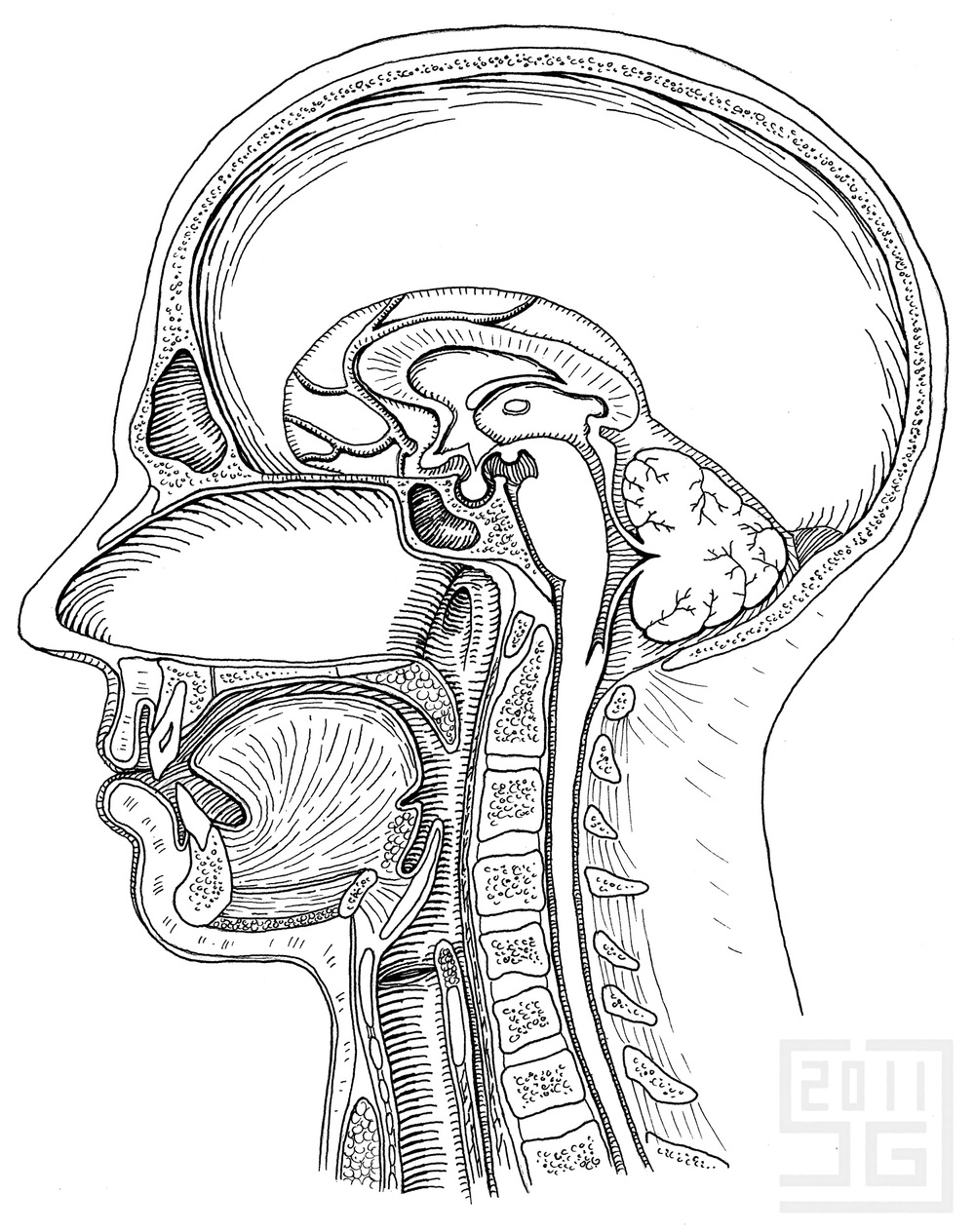 Sagittal Section of Head
