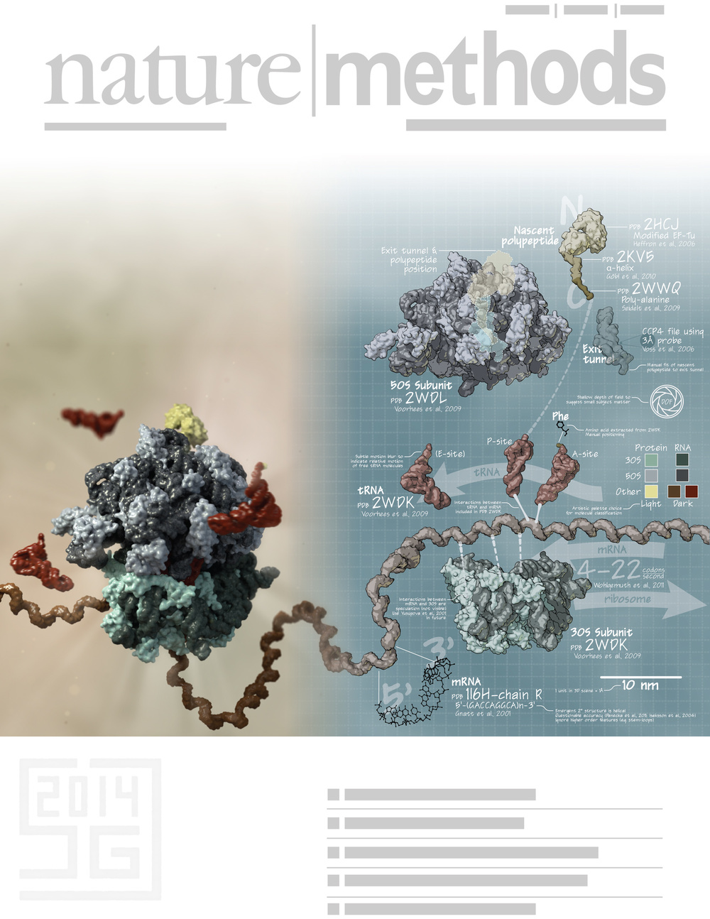 70S Ribosome: Data and Design