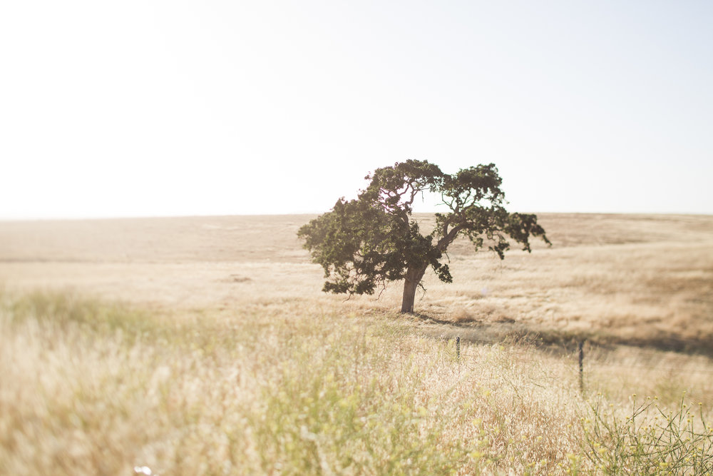 california road trip-4128.jpg