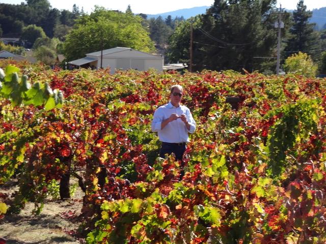 RJ Nowinski in the vineyard days before harvest.