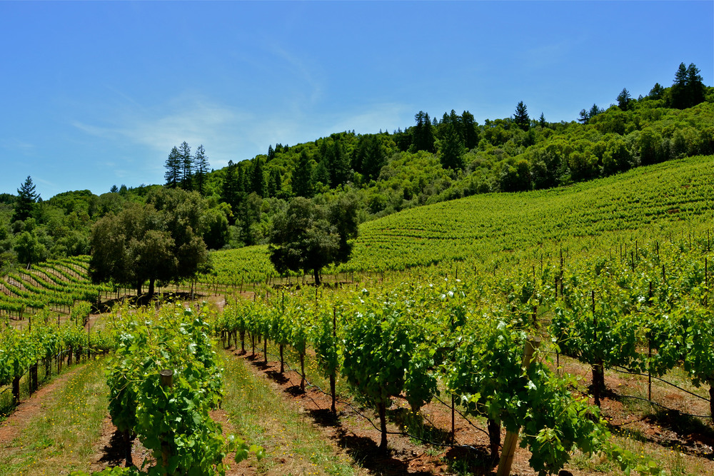 SUSTAINABLY FARMED VINEYARDS