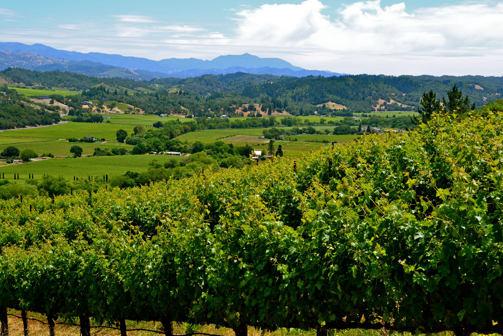 DRY CREEK VALLEY - SONOMA COUNTY
