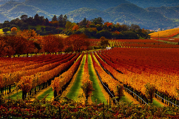 A spectacular display of Sonoma County colors in this photo from Meghan Smith.