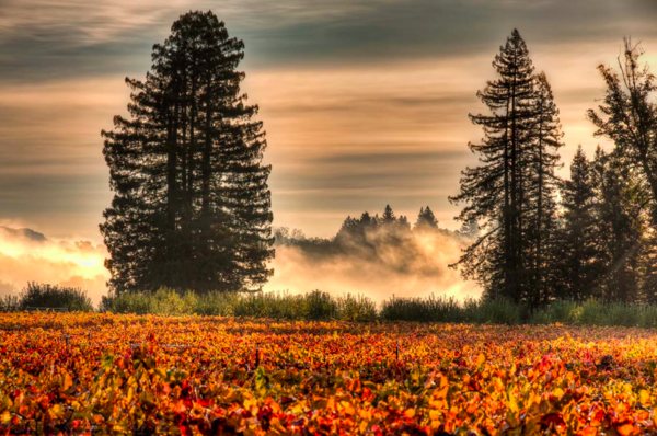 A beautiful fall morning in the Russian River. Photo by Steve Carver.