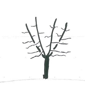 Fig2NormalTree.jpg