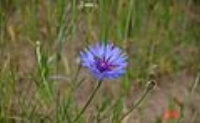 This is a Cornflower.  Not the color that Crayola says it should be.