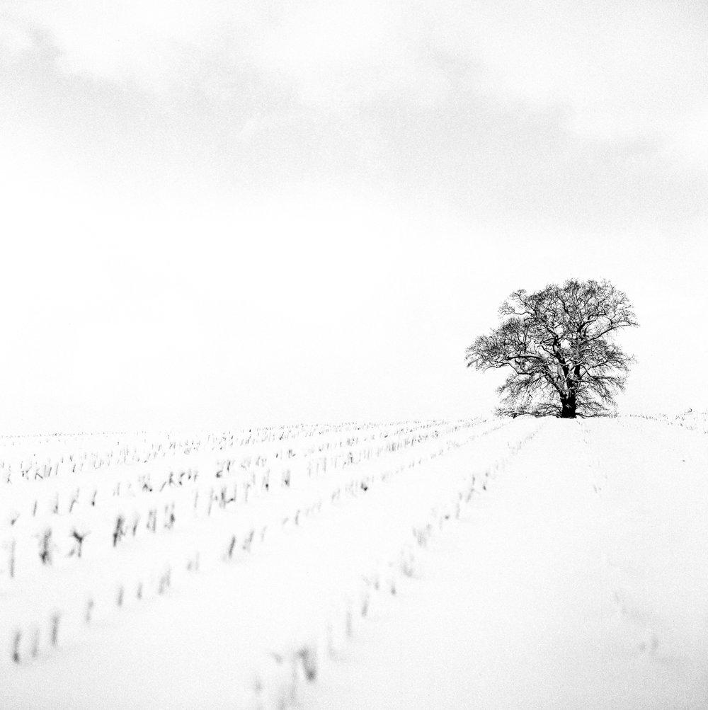 Snow-28012-2.jpg