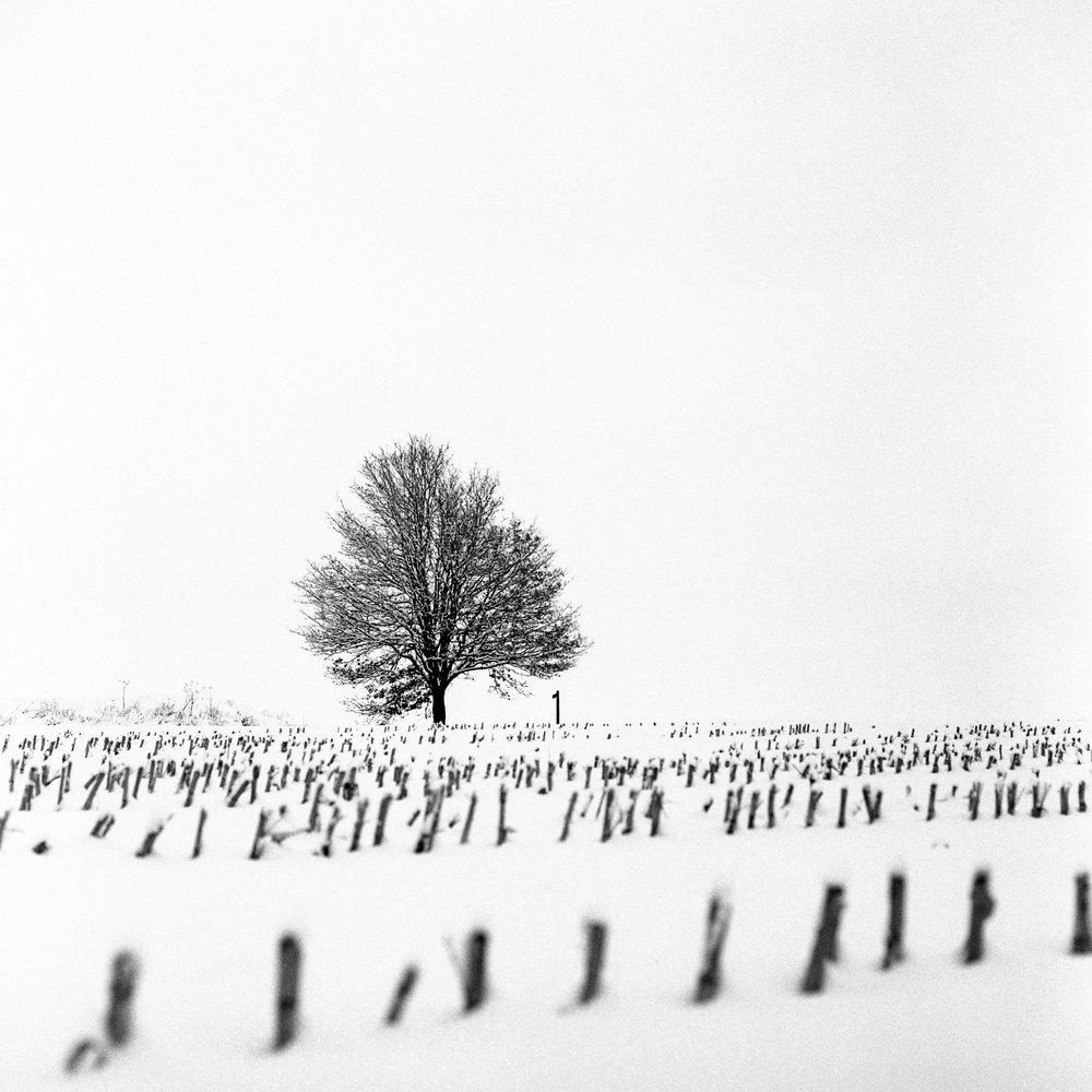Snow-28010-2.jpg