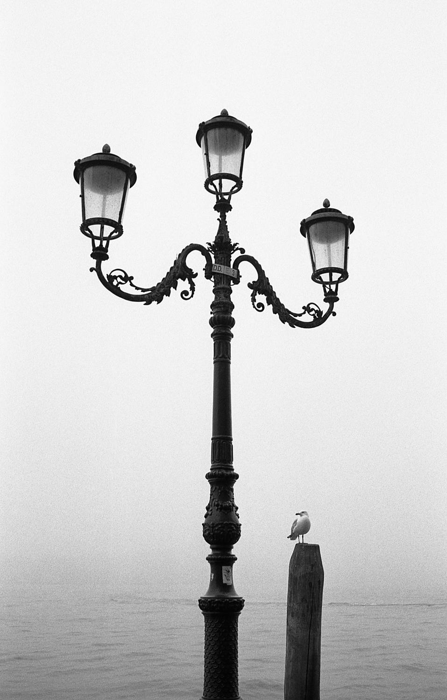Venice-Hp5+2003.jpg