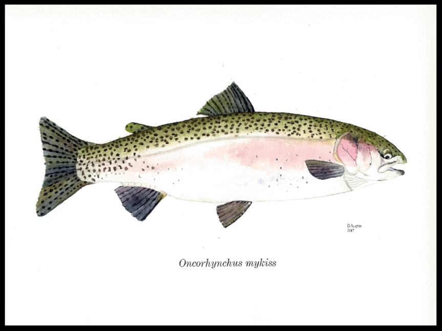 Fish 3-- Rainbow trout 2 smaller.jpg