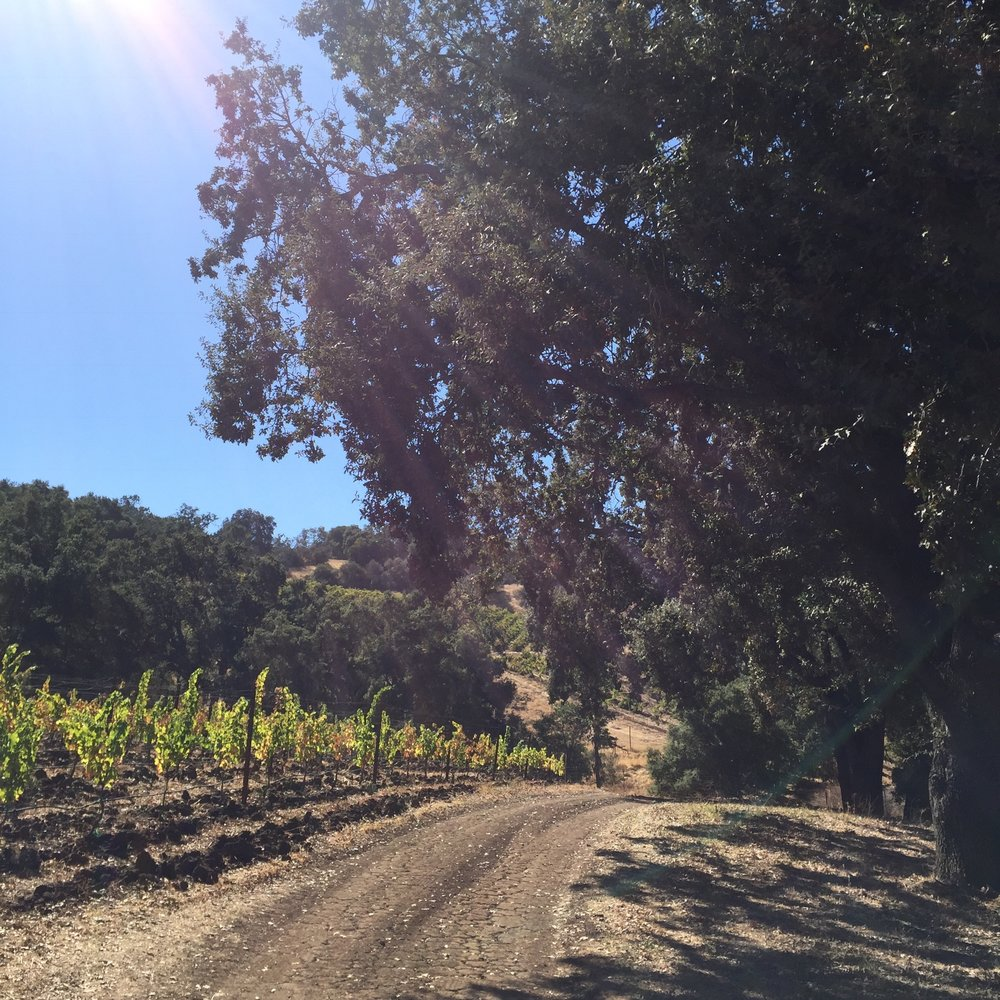 "Paso Robles translates to ""Pass of the Oaks."" Towering oak trees line the vines at Halter Ranch."