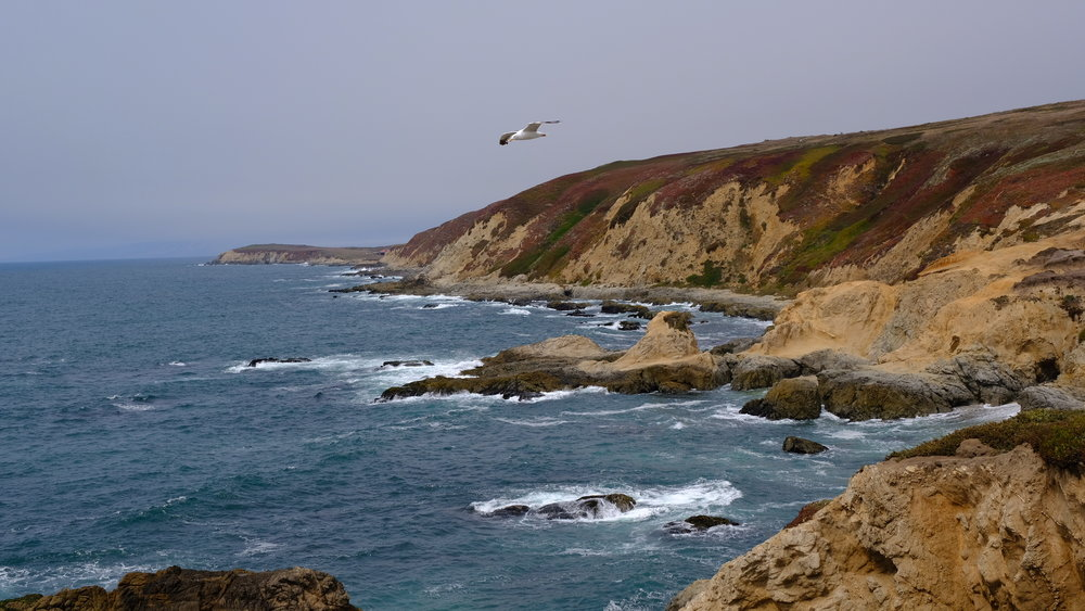 Bodega Head in Bodega Bay, California