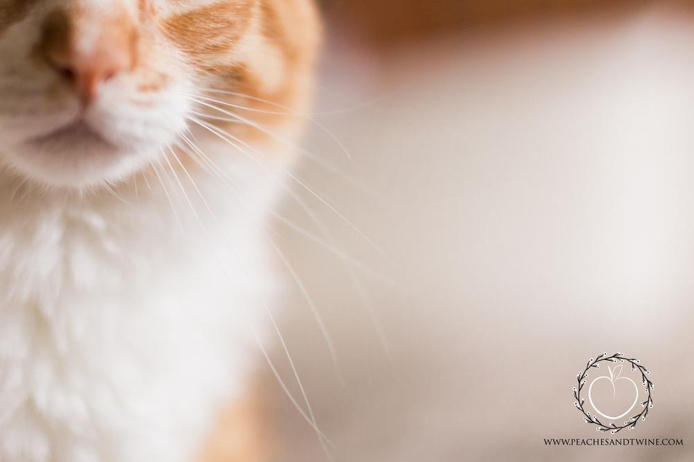 Kitty boudoir phoenix boudoir photography cat boudoir indoor fine art boudoir arizona boudoir photographer 1.jpg