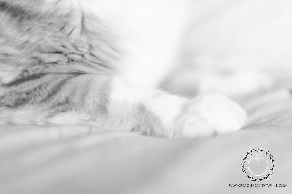 Kitty boudoir phoenix boudoir photography cat boudoir indoor fine art boudoir arizona boudoir photographer 3.jpg